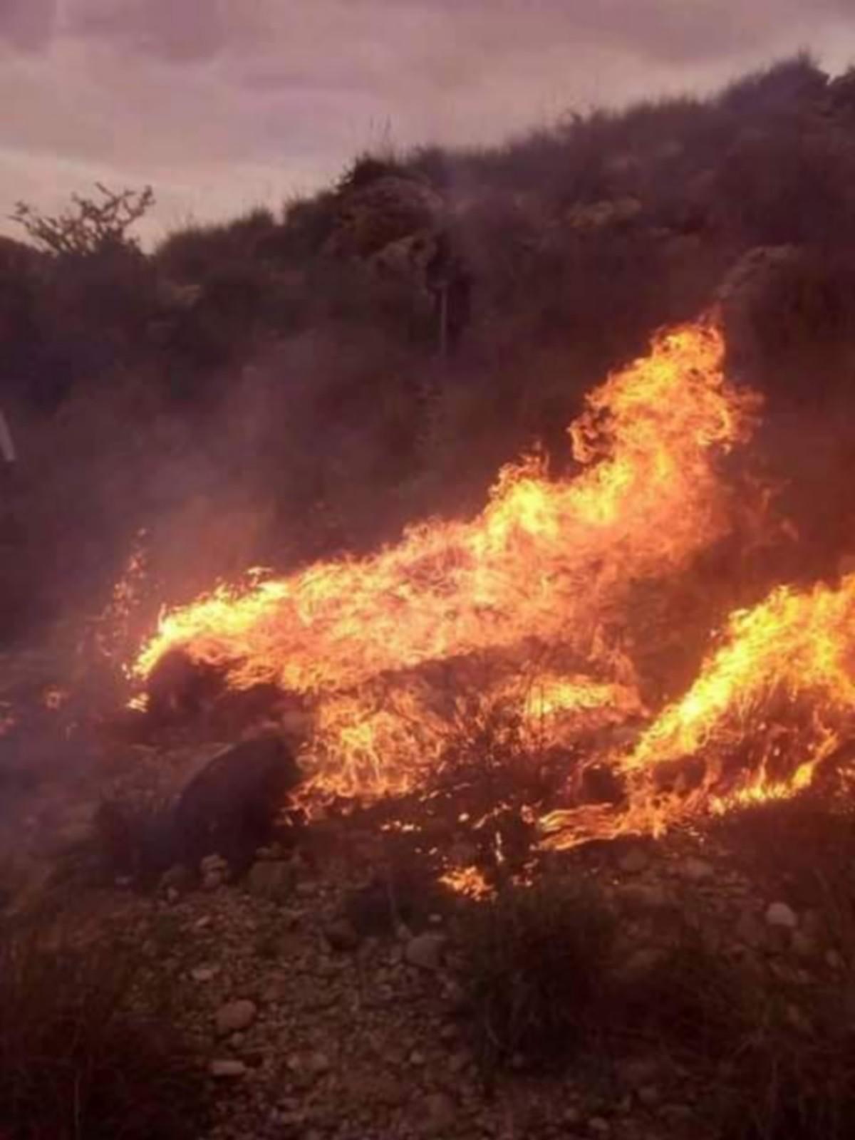 وزارة الفلاحة: عقوبات حرق الغابات والمزارع تصل حدّ إعدام