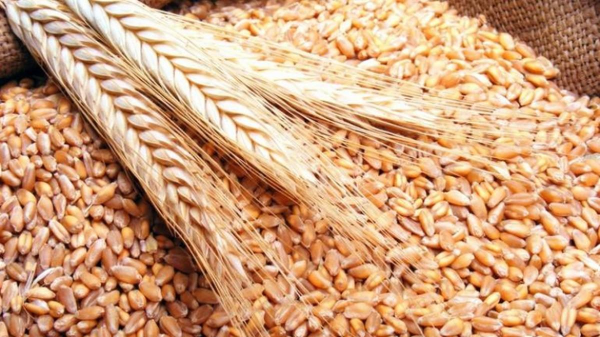 جندوبة : جلسة عمل للنظر في استعدادات موسم الحصاد المقبل