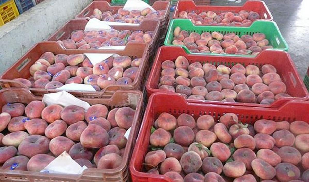 تطور صادرات الغلال التونسية ب 28 بالمائة على مستوى الكميات و16 بالمائة على مستوى القيمة