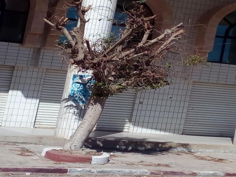 صفاقس التقليم المفرط  للأشجار يُفقدها  جماليتها