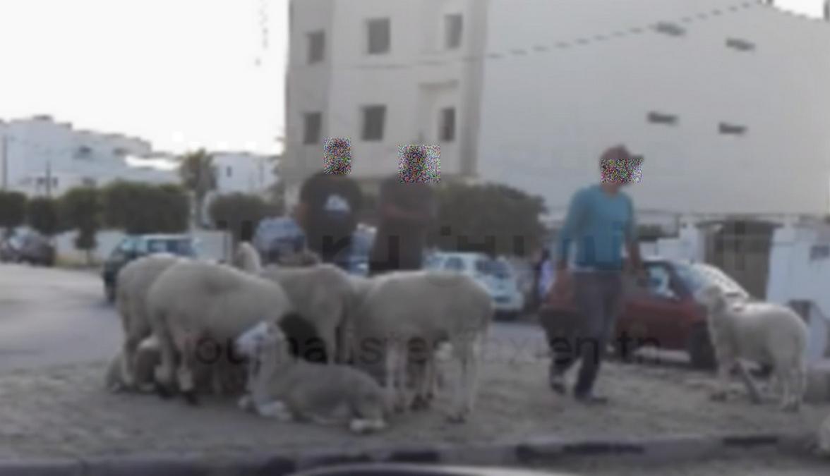 صفاقس وعلوش  العيد : الأسواق  كثيرة والشاري  يجيبو  ربّي