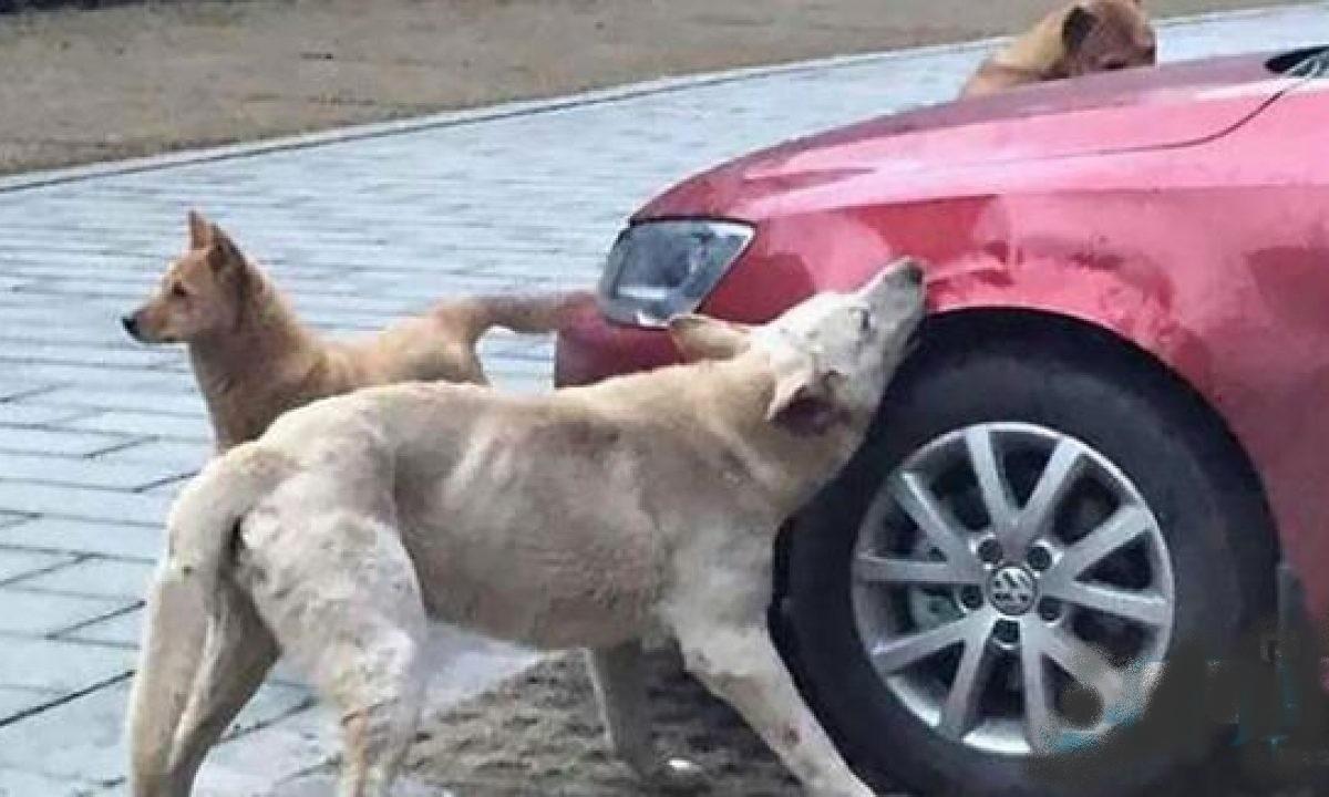 صفاقس : تجربة مُرّة مع  الكلاب  السائبة
