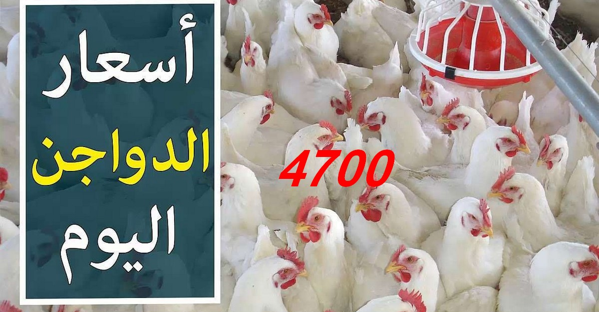 أسعار  الدجاج  فاقت  كل  توقّع  والمستهلك في حيرة