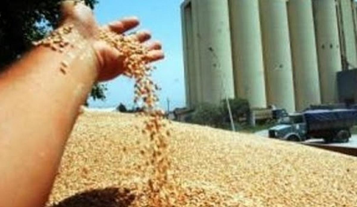 تونس: نحو  تامين  نقل صابة الحبوب عبر السكك الحديديّة والشّاحنات