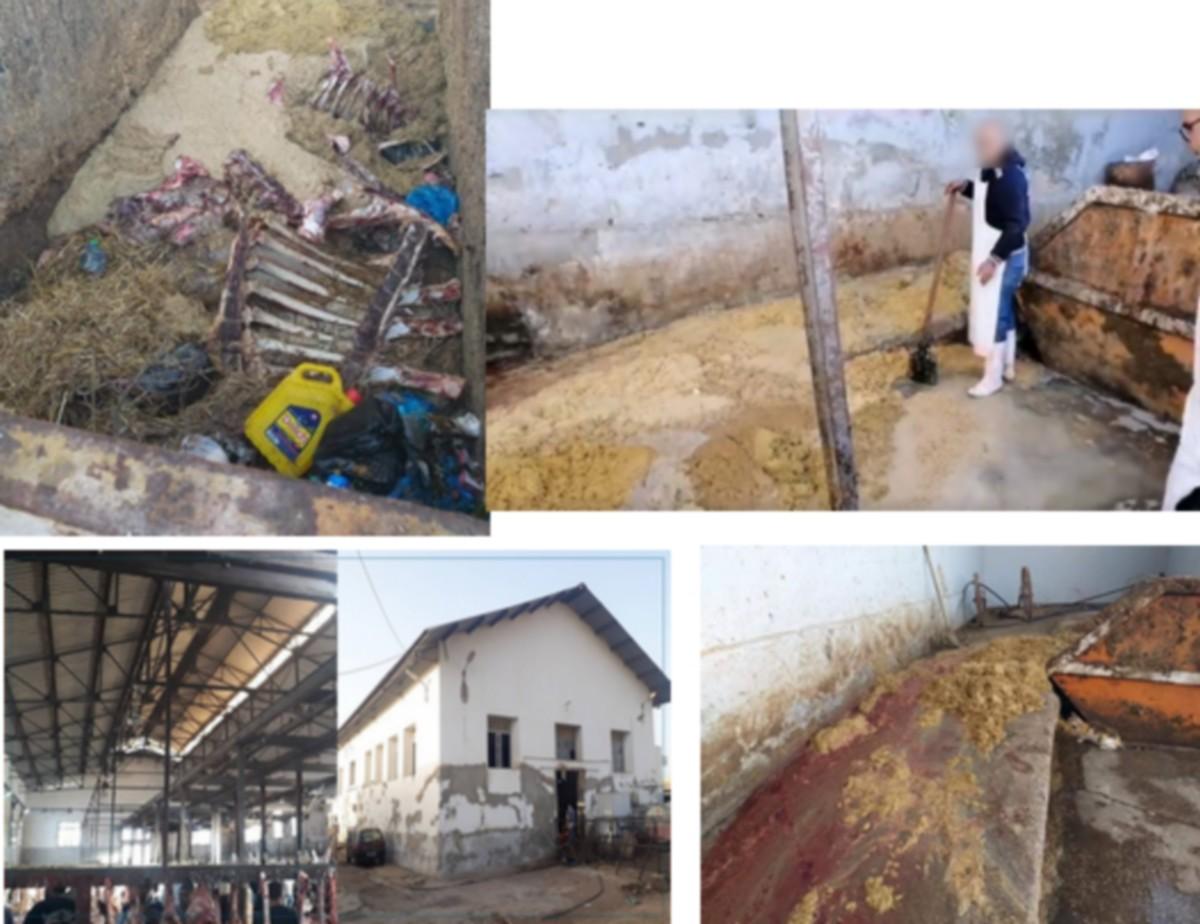 صفاقس في صور:المسلخ البلدي بصفاقس ..من هنا تمراللحوم الى المواطن في رمضان