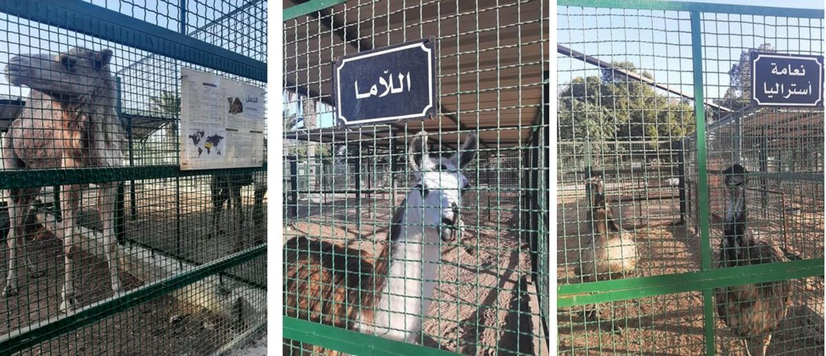صفاقس:هل تمّ فعلا اهمال حيوانات حديقة  التوتة خلال  الحجر  الصحّي  الشامل