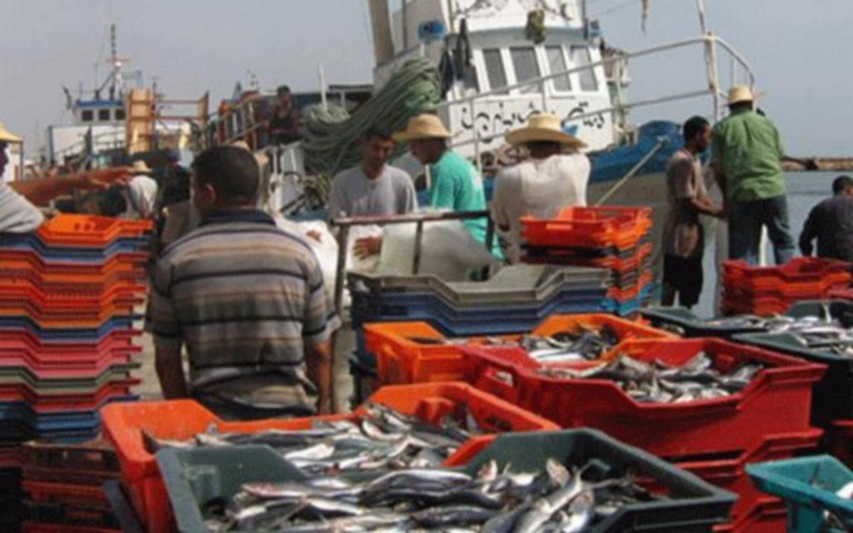 ارتفاع صادرات منتوجات الصيد البحري إلى 1ر11 ألف طن مع موفى ماي 2021
