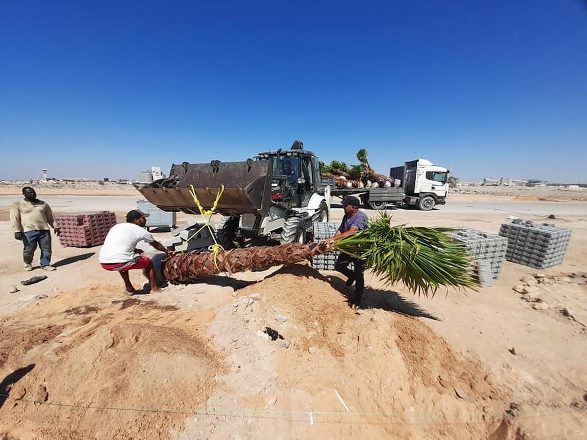 شكرا لنشطاء المجتمع  المدني :زراعة أول نخلة بشاطئ الكازينو بصفاقس